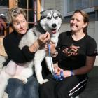 Nala the husky with two of her saviours, Clutha District  Council dog ranger Karenne Walker (left...