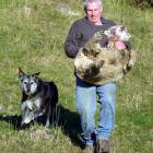 Ngapara farmer Peter Stackhouse with one of the dead sheep last year, accompanied by farm dog...