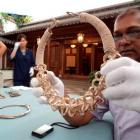 Otago Museum chief executive Shimrath Paul chooses a silver and gold necklace from the Shanghai...