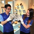 Otago Museum design services officer Shanaya Allan (right) and Li Nan, of the Shanghai Science...