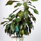 Outfitted with a Botanicall, a plant is ready to Twitter. Photo from The Baltimore Sun.