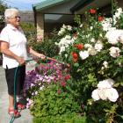 Pat Braddick, of Clyde, waters  her flower garden yesterday. She said she would be ''not...