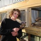 Patrick Gallagher gets the cages ready for patients at the Orokonui Ecosanctuary's new lizard...