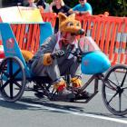 Peter King foxing on his rapid run in Sunday's trolley derby in Dunedin. Photo by Gerard O'Brien.