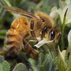 Photo by National Beekeepers' Association.