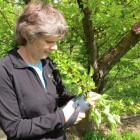 Plant and Food Research scientist Jill Stanley, based in Clyde, and fellow scientists are...