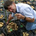 Taieri Lions Club project manager Jim Penno (65) with the losing potato in his left hand and the...