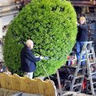 Putting the finishing touches on a Dunedin City Council giant flowering rugby ball in Dunedin...