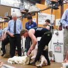 Rakaia shearer Tony Coster has won this year's Canterbury A&P Show New Zealand Corriedale...