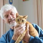 Retired Mosgiel resident Dave Radley  wants to know why somebody shot his cat, Reddy, blinding...