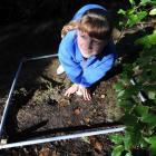"Rhiannon McFarlane (10), a year six pupil at Abbotsford School, takes part in a ""Meeting a Metre""..."