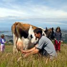 Richard Fitzpatrick milks Delilah while daughters Anna (left) and Elly keep watch. Photo by...