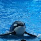 SeaWorld_Orlando074.jpg