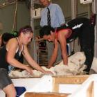 Senior shearing champion, Australia-based Te Atakura Crawford, originally of Te Karaka, works...