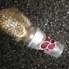 Sergeant Andrew Russ was patrolling the streets when he came across a hedgehog with a plastic cup...