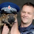 Sergeant Craig Baron and the Dunedin dog section's latest recruit, Halo. Photo by Gerard O'Brien.