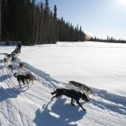 Sled dogs take guests on a tour at PAWS for Adventure in Fairbanks, Alaska. PHOTO: STATE OF...