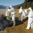South Westland Department of Conservation staff wear protective clothing as they load 1080 cereal...
