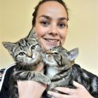 SPCA Otago animal manager Grace Hepburn (21) holds  two of the tabbies  on offer in the Tabby-A...