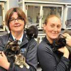 SPCA Otago executive officer Sophie McSkimming and animal attendant Rachel Van Grunsven in the...