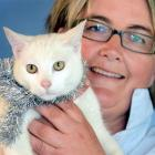 SPCA Otago executive officer Sophie McSkimming with Santa Claws at the Opoho animal shelter, in...
