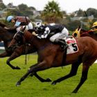 Spiro (far side) is a long head from beating Shez Sinsational in the Auckland  Cup in March....