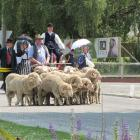 Stonehenge Station merinos are driven down the street by James Crutchley, of Kyeburn, followed by...