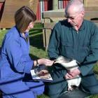 Sue Downton and Colin Wolverson feed a yellow-eyed penguin from Bushy Beach with salmon from a...