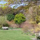 the_azalea_garden_in_dunedin_botanic_garden_was_la_4e96688bcf.JPG