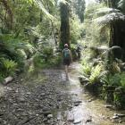 The Barn Bay track sometimes follows riverbeds, some dry, some wet. Photo by Marjorie Cook.
