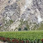 The Central Otago wine industry is through the worst of the industry correction, some observers...