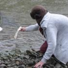 The 'monster eel' comes up for 'pizza bread' in the Manawatu River.