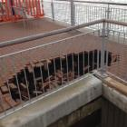 The new hole that has appeared in the Esplanade at St Clair. Photo Stephen jaquiery