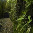 The Old Caversham Rail Tunnel group wants the Dunedin City Council to commit to a thorough...