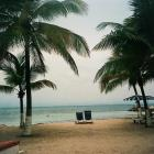 The Palm trees offer shade beside the ocean on the island of Guadeloupe.