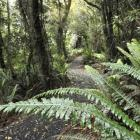 The recently completed Orokonui Ecosanctuary loop track sponsored by the Otago Regional Council....