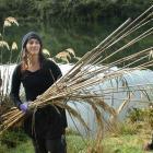 Phillipa Crofskey collects toetoe stalks at Sullivan's dam, on the Leith Saddle, near Dunedin,...