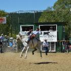 Tom Scott, of Gisborne, competes in the Lawrence Rodeo open bareback for the first time yesterday...