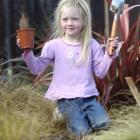 Skyla Diehl (4) of the Mornington Playcentre prepares to plant one of  60 shrubs. Photo by Peter...