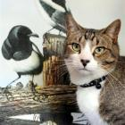 Two-year-old Tigger Graham, of Abbotsford, with the bell collar which warns birds of his presence...