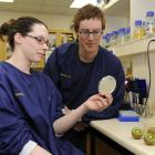 University of Otago assistant research fellow Rebekah Frampton and molecular microbiologist Dr...