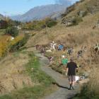 Wakatipu volunteers flocked to the latest Lake Hayes planting day on April 28 as part of Project...