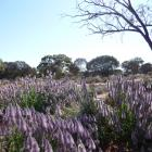 Wildflowers sit among an ochre-red landscape on the Golden Quest Discovery Trail in Western...