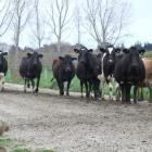World dairy prices have already risen from recent lows. Photo by ODT.