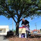 Former Waitaki mayor Alex Familton unveils an information panel at the North Otago memorial oaks...