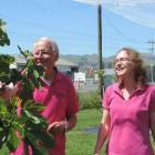 Murray Douglas and Helen Walker, of Te Mata Figs. Photo: Charmian Smith