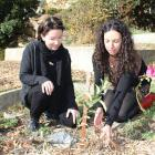Maria Shea, of Alexandra, and Heather Horswell, of Clyde, boost the growth of a dead apple tree's...