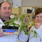 Dr Greg Walker and research assistant Bettina Poller show plants used in a University of Otago...