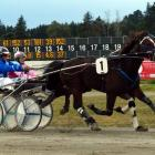 King Denny, seen here winning the 4yr-old trot at the 2015 Harness Jewels in Ashburton, is now...