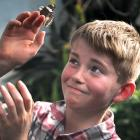 Invercargill resident Levi Botting (10) enjoys a close encounter with a butterfly at the Otago...